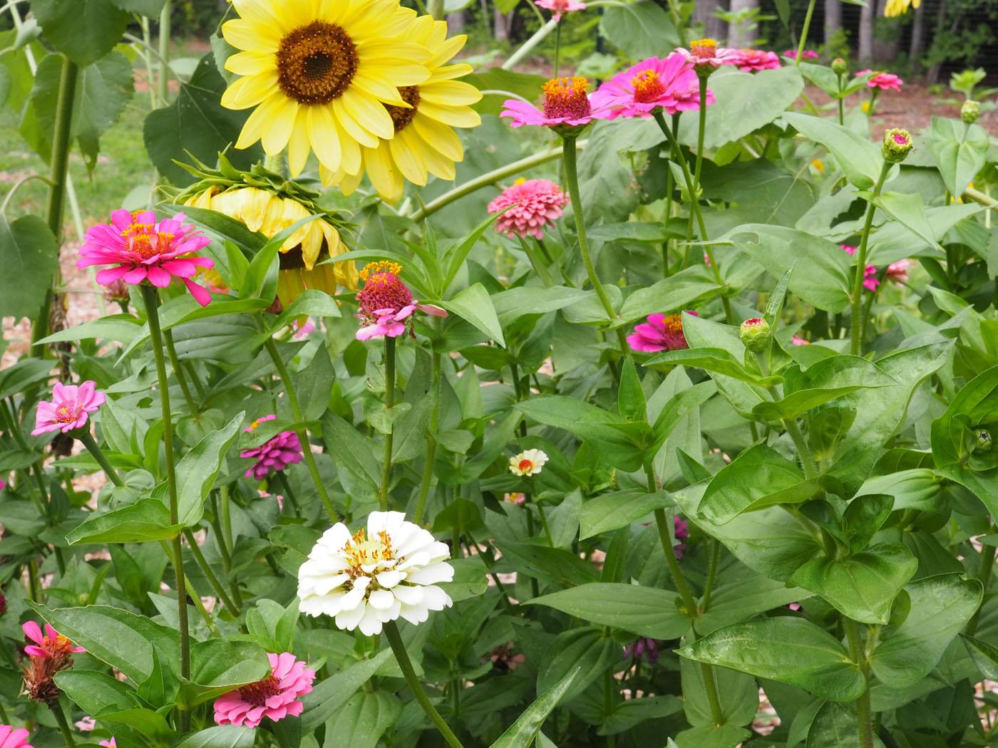 Community Garden • Pinnacle Apartments